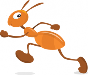 Basic Vocabulary - Animal - Ant