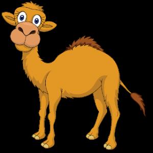 Basic Vocabulary - Animal - Camel